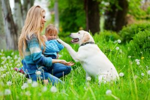 dog training tips work on our children